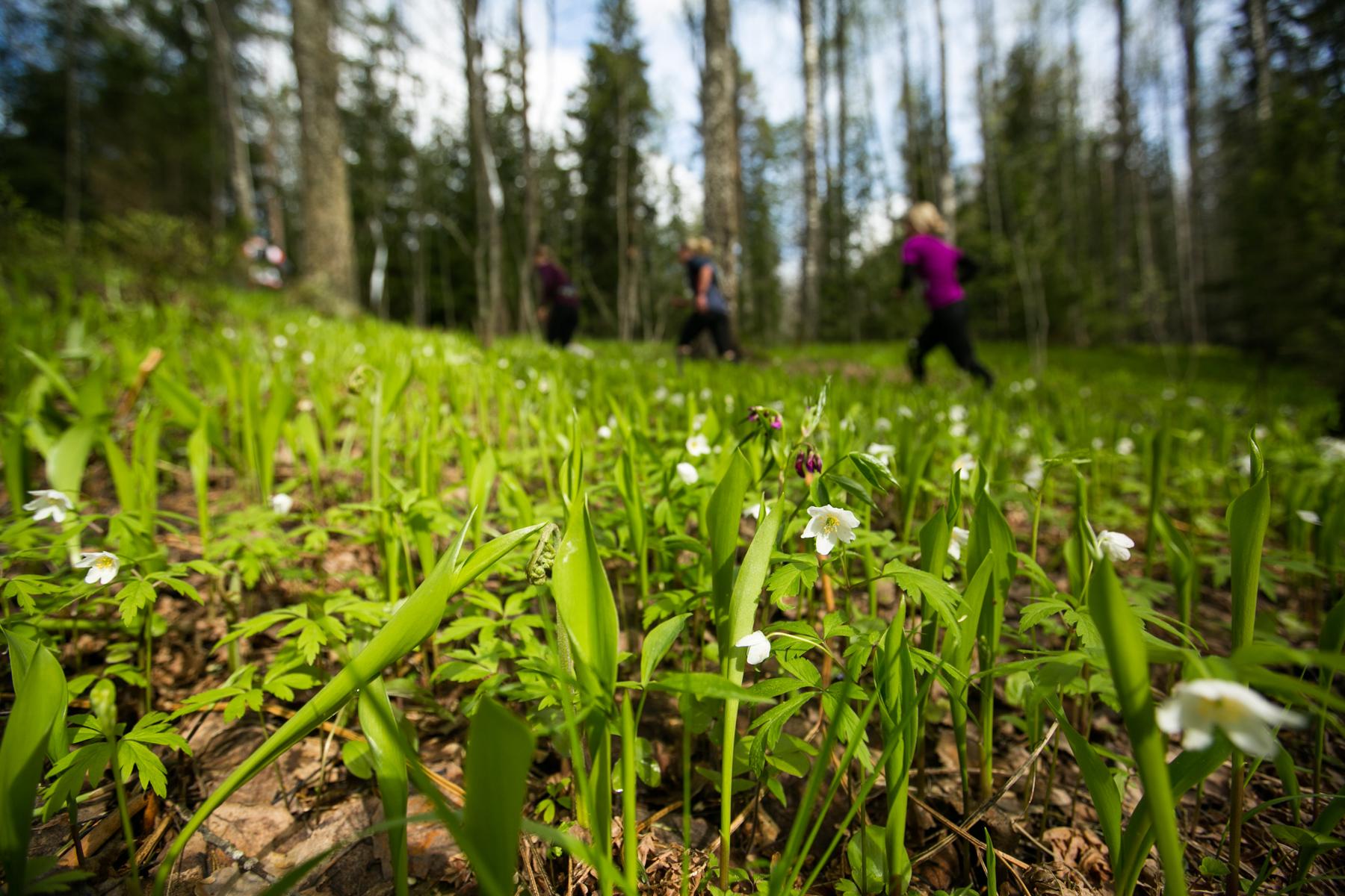 Keväinen metsä valloitti Bodom Trailin juoksijoiden sydämet. Kuva: Aapo Laiho