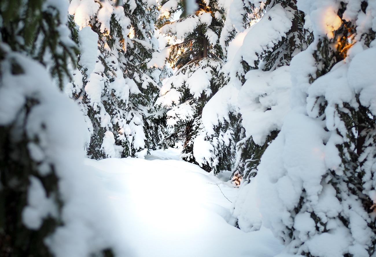 Talvipolkujuoksu Kuva: Terhi Jaakkola
